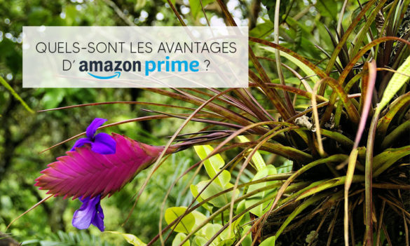 Quels-sont les avantages d'Amazon Prime